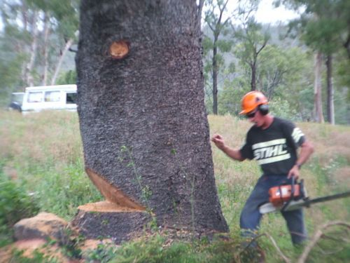 Steve Smith Chainsaw Training